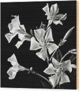 Oleander In Black And White Wood Print