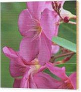 Oleander Maresciallo Graziani 2 Wood Print