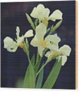 Oleander Marie Gambetta 2 Wood Print