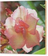 Oleander Mrs. Roeding 1 Wood Print