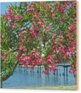 Oleander On Melbourne Harbor In Florida Wood Print
