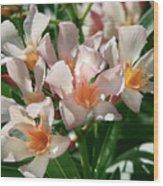 Oleander Petite Salmon 1 Wood Print