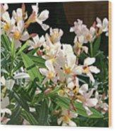 Oleander Petite Salmon 3 Wood Print