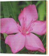 Oleander Professor Parlatore 2 Wood Print