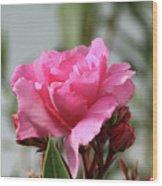 Oleander Splendens Giganteum 2 Wood Print