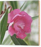 Oleander Splendens Giganteum 3 Wood Print