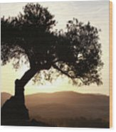 Olive At Sunset Wood Print