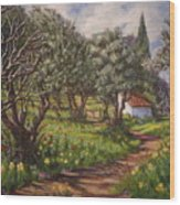 Olive Grove In Spring-time Wood Print
