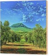 Olive Grove Spain Wood Print