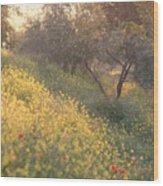 Olive Grovetuscany Wood Print