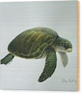 Olive Ridley Turtle Wood Print