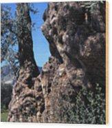 Olive Tree 2000 Years Old Wood Print