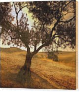 Olive Tree Dawn Wood Print