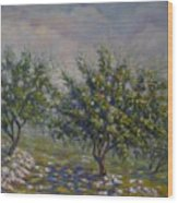 Olive Tree Field Wood Print