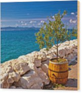 Olive Tree In Barrel By The Sea Wood Print