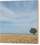 Olive Tree On The Wheat Field  Wood Print