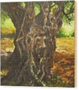 Olive Tree Rooted 1 Wood Print