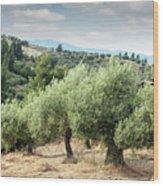 Olive Trees Hill Wood Print