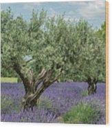 Olive Trees Of Provence Wood Print