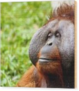 Ollie The Orangutang Wood Print