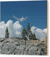 Olmsted Point Pine Rear View Wood Print