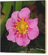 Olympia Pink Wood Print