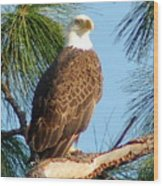 Olympia Street Eagle Wood Print by Sandy Poore
