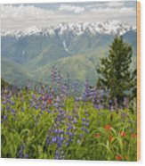 Olympic Mountain Wildflowers Wood Print