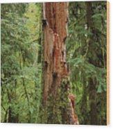 Olympic Rainforest #1 Wood Print