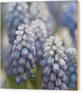 Ombre Blue - Square Wood Print