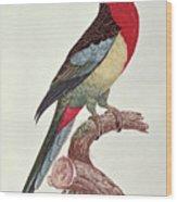 Omnicolored Parakeet Wood Print