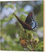 On Blue Wings Wood Print