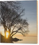 On Fire - Bright Sunrise Through The Willows Wood Print