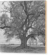 On The Delta Monochrome Wood Print