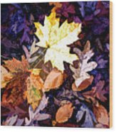 On The Forest Floor Vivid Colors Wood Print