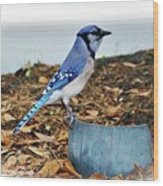 On The Look Out  Wood Print