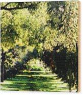 On The Path Wood Print
