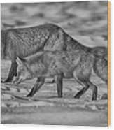 On The Prowl Bw Wood Print