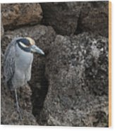 On The Rocks - Yellow-crowned Night Heron Wood Print