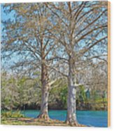 On The San Marcos River Texas Wood Print