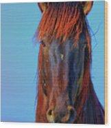 Onaqui Wild Stallion Portrait Wood Print