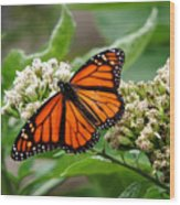 Once Upon A Butterfly 001 Wood Print