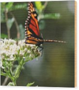 Once Upon A Butterfly 006 Wood Print