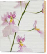 Oncidium Orchid Flowers Wood Print