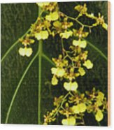 Oncidium Orchids Wood Print