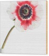 One Anemone Wood Print