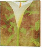 One Arum Lily Wood Print