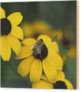 One bee over the flower's nest Wood Print