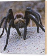 One Big Hairy Spider Wood Print