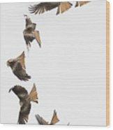 One Bird One Dive. Wood Print
